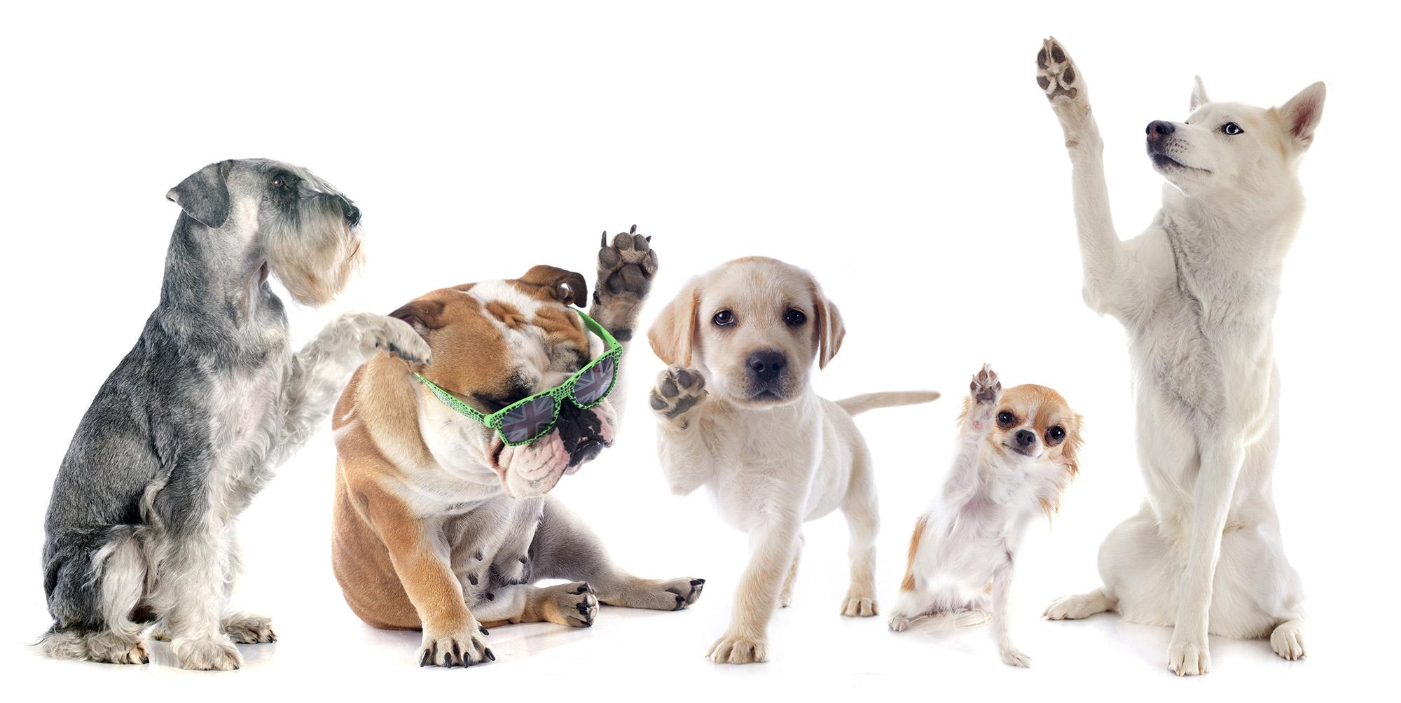 aurea-pet-cucce-cuscini-cani-antibatteriche